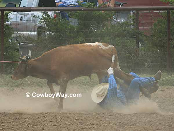 A cowboy gets trampled at a ranch rodeo