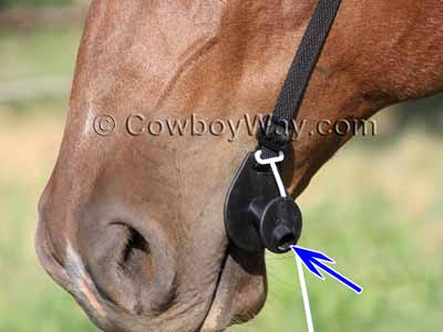 Horse wearing the Easy Wormer