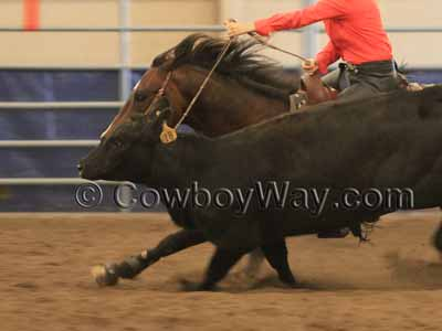 Romal reins on a Working Cow Horse entry