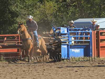 A steer coming out of the roping box