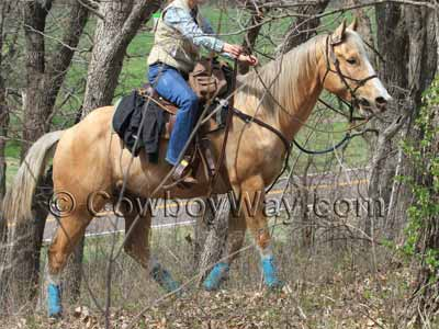 A lady trail rider on a palomino horse on a wooded trail