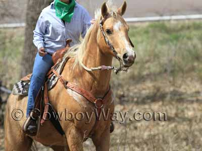 A lady riding up a hill during a trail ride