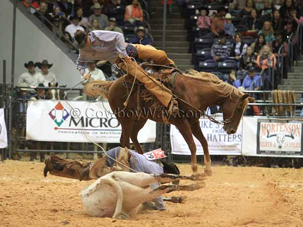 A rider gets bucked off in the stray gathering event