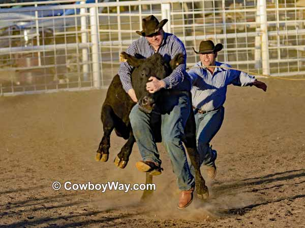A cowboy gets lifted off the ground by a cow