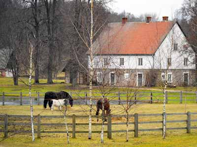 Horses grazing behind a wooden fence