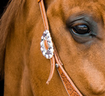 A beautiful bridle buckle on a headstall