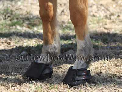 Pair of Cavallo Simple boots on a palomino horse