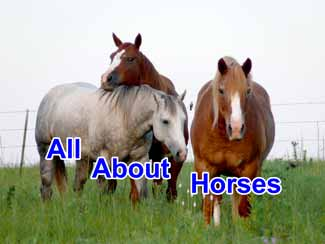 Horse Information