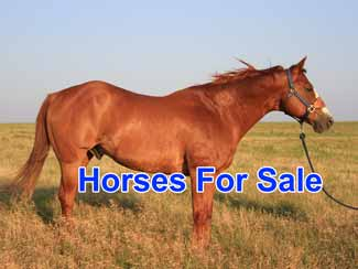 Free horse classifieds