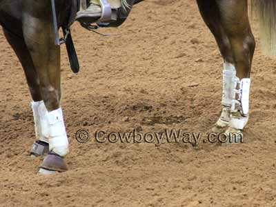 A horse wearing splint boots, bell boots, and skid boots