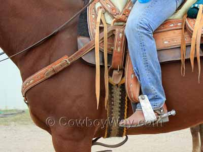 A Western cinch on a roping horse